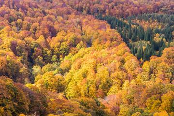 Close -up autumn tree at mountain