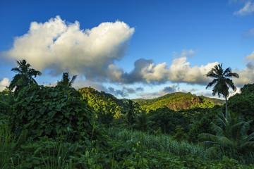Hiking through the jungle, seychelles 3