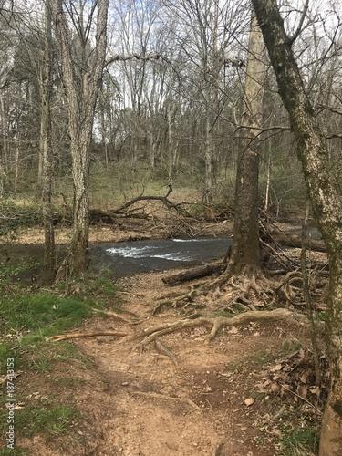 Papiers peints Rivière de la forêt Roots