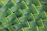 fresh green coconut leave background