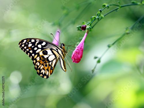 butterfly on flower - 187422571