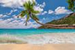 Coconut palm on tropical beach.