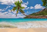 Coconut palm on tropical beach. - 187425739