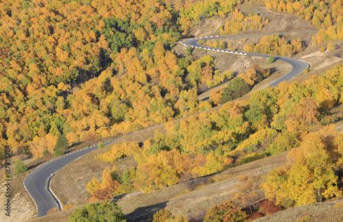 Papiers peints Miel The mountain road, in autumn