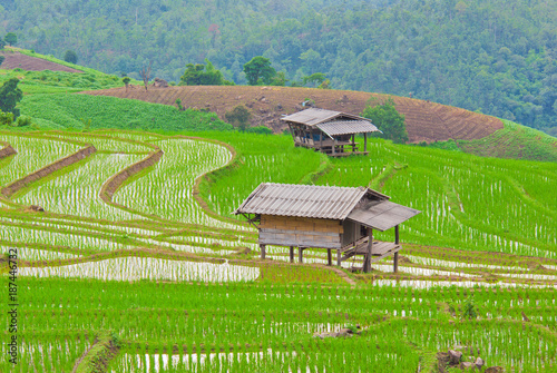 Staande foto Pistache Terrace rice fields in Mae chaem, Chaing Mai, Thailand