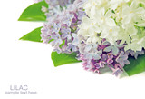 Lilac flowers bunch isolated on white background with sample text - 187447558