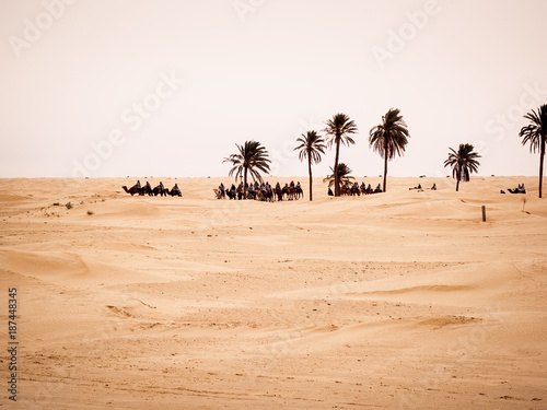 Tunisian desert landscape, Douz south of Tunisia, caravan in the desert near a palm grove - 187448345