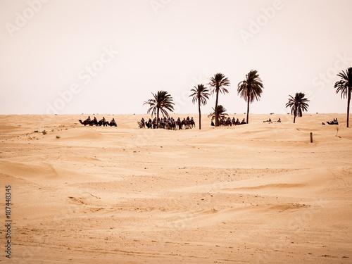 Tunisian desert landscape, Douz south of Tunisia, caravan in the desert near a palm grove - 187448345