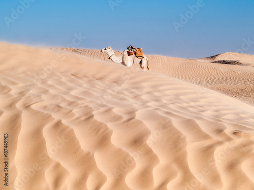 Tunisian desert landscape, Douz south of Tunisia, sand and camel