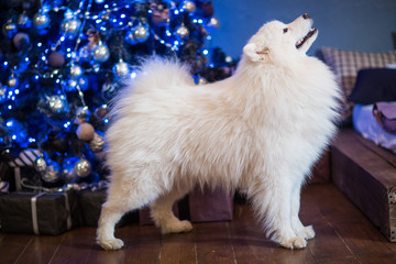 cute dog in the christmas lights