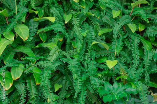 Foto Murales Green leaf wall,green leaves background