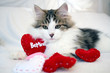 Valentine kitten, white & brown with red hearts that say Be Mine. Kitty is on white background. Concepts of love, St. Valentine's Day, and romance. This is a purebred Siberian Forest Cat