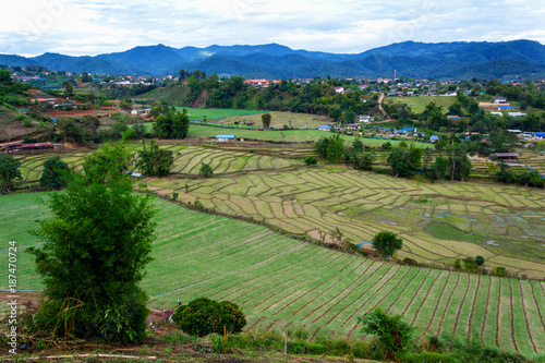 In de dag Olijf Aerial view of rice paddies farm and vegetables farm in rural Thailand.