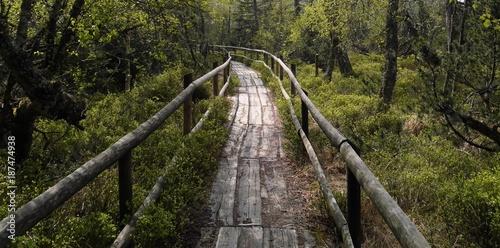 Foto op Plexiglas Weg in bos Hochmoor Kaltenbronn