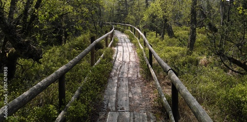 Road in forest Hochmoor Kaltenbronn