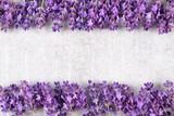 Lavender. - 187486798