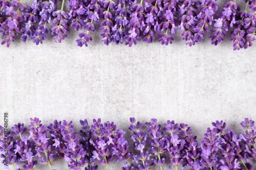 Fototapeta Lavender.