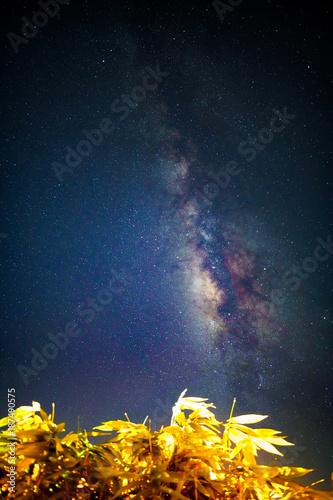 밤하늘의 은하수와 나무 - 187490575