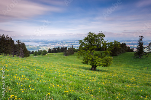 Fotobehang Pistache Un arbre dans une prairie et Yverdon-les-Bains et le Lac de Neuchâtel en fond