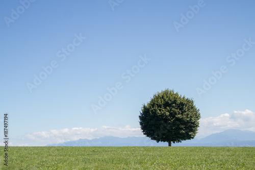 Aluminium Blauwe hemel Un arbre solitaire rond