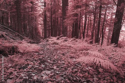 Road in forest Une forêt jurassienne en infrarouge, rose.