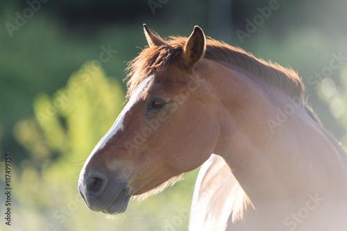 Portrait d'un cheval