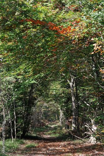 Fotobehang Grijze traf. chemin forestier en automne dans le parc naturel régional du Gâtinais Français