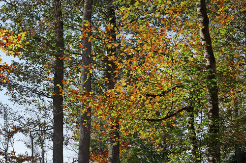 Fotobehang Zwart Feuillages d'automne en forêt de Fontainebleau