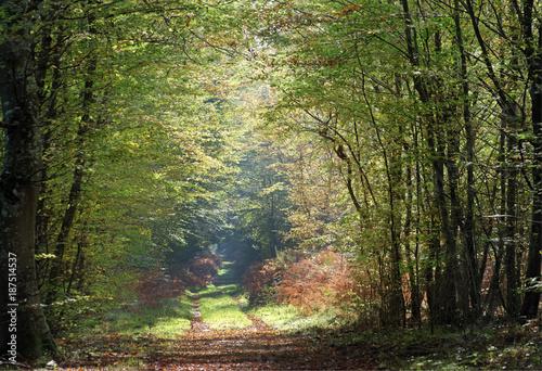 Fotobehang Pistache chemin forestier en automne dans le parc naturel régional du Gâtinais Français