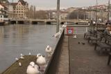 Möwen auf einem Geländer am Fluss Limmat im Zentrum von Zürich - 187519116