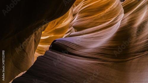 Foto op Plexiglas Arizona antelope