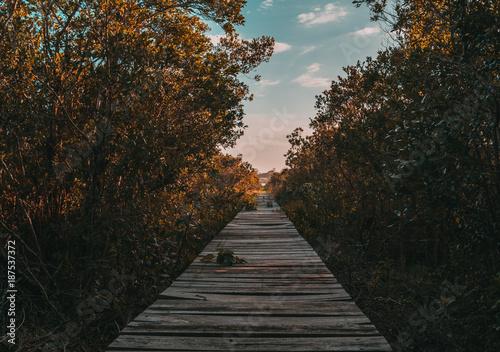 Foto op Plexiglas Weg in bos Caminho