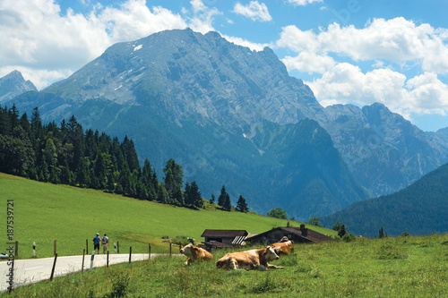 Foto op Plexiglas Blauw Cows laying on meadow against blue mountain tops
