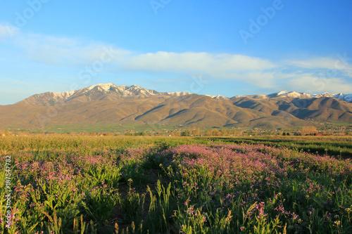 Foto op Aluminium Blauw Spring field in rural Utah, USA.