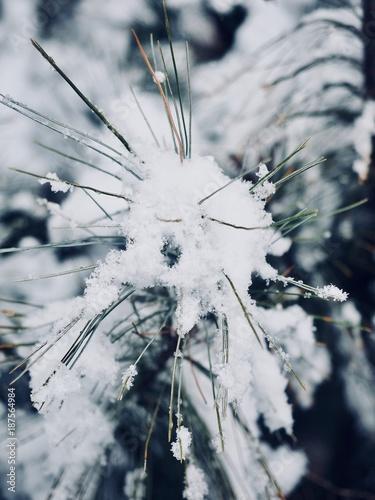 Foto Murales 한국의 숲에서 본 눈꽃 , 겨울, 스노우, 눈