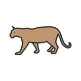 Tiger, animal, cub