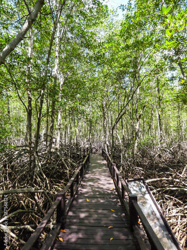 A view of the Mangrove Nature Trail walkway at Pran Buri National Forest Park - Hua Hin, Thailand - 187568124