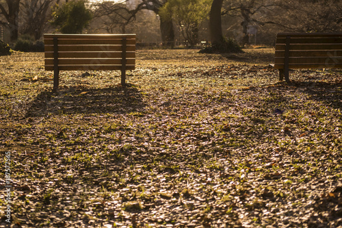 Foto Murales 公園のベンチ 夕暮れ