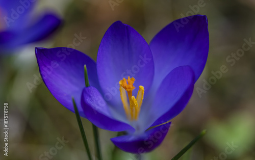 spring flowers background  - 187578758