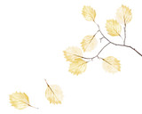 small tree branch and two falling dried yellow leaves - 187581303