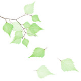 tree branch with three falling green dried leaves - 187581310