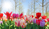 Glück, Lebensfreude, Frühlingserwachen, Leben: Buntes, duftendes Blumenfeld im Frühling :) - 187581964