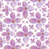 seamless background from lilac blooms - 187582593