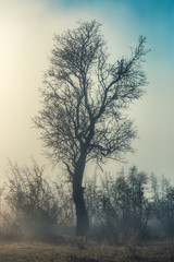 Trees on white background in a foggy day