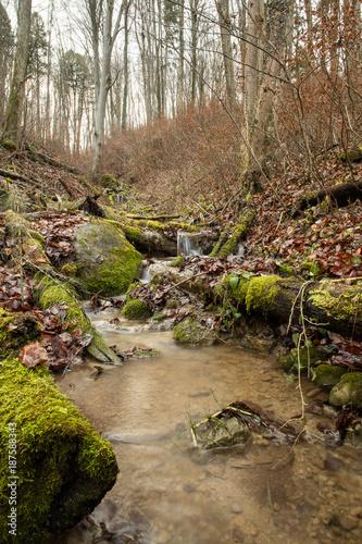 Papiers peints Rivière de la forêt Bach