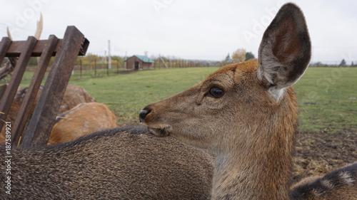 Fotobehang Kameel Deer in countryside
