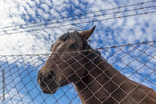 Fotobehang Paarden Brown horse with blue cloudy sky