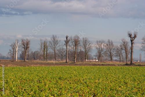 Poster Donkergrijs paesaggio di campagna in inverno