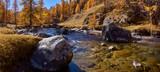 La Clarée river with larch trees in full Fall colors (panoramic). Haute Vallée de la Clarée, Névache, Hautes-Alpes, Alps, France - 187615390