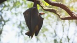 Lone Pteropus Flying Fox in the Wild, with Sound - 187628908